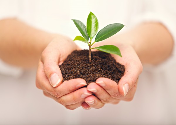 Woman's hands with a young plant growing in soil